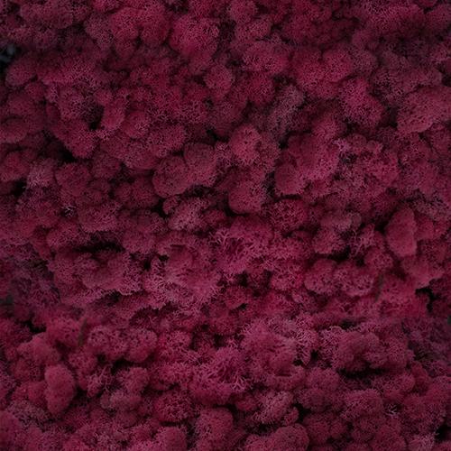 Rosu cyclam