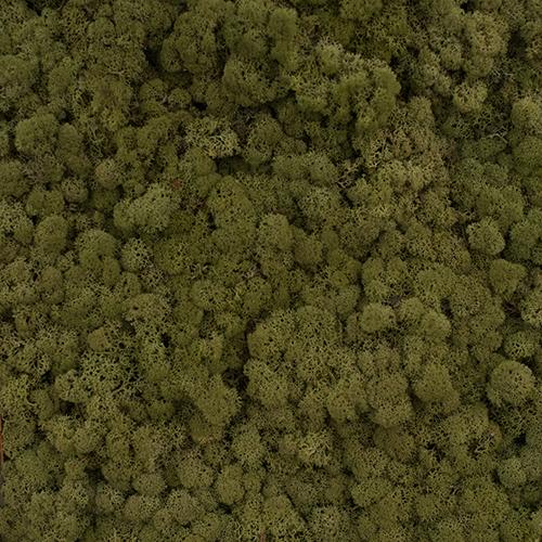 Verde dark olive