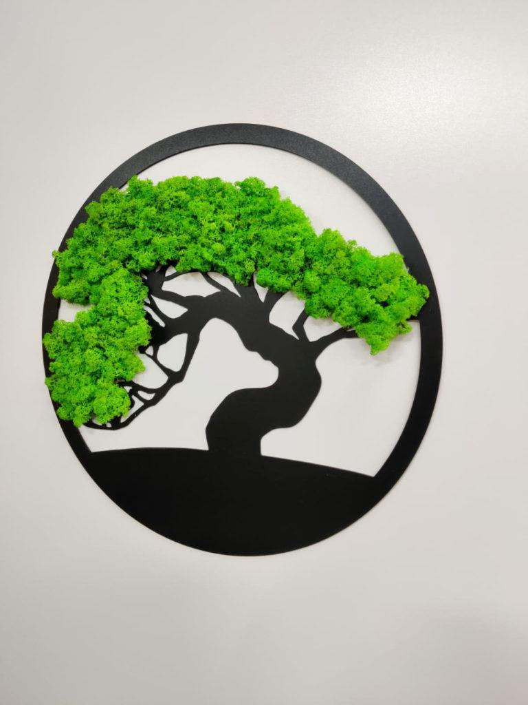bonsai1.