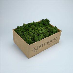 Licheni decorativi cutie 500 grame Verde Inchis