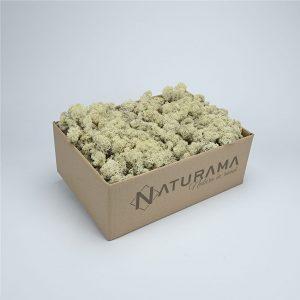 Licheni decorativi cutie 500 grame Alb