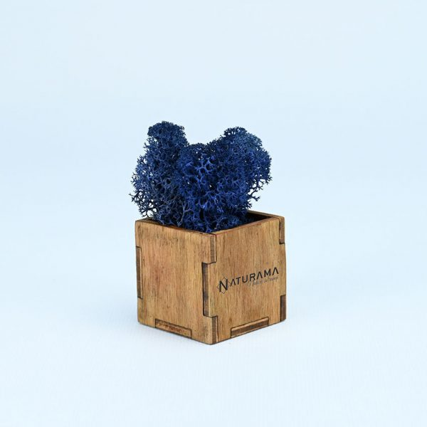 13 albastru marin 2