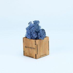 Licheni decorativi cutie 500 grame Albastru Azur
