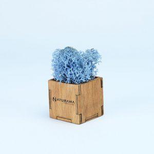 Licheni decorativi cutie 500 grame Albastru Ice