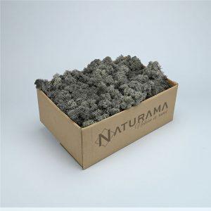 Licheni decorativi cutie 500 grame Gri