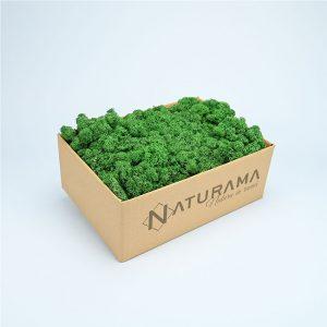 Licheni decorativi cutie 5 kg Verde Mediu