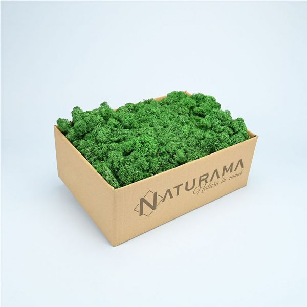 2 verde mediu 1