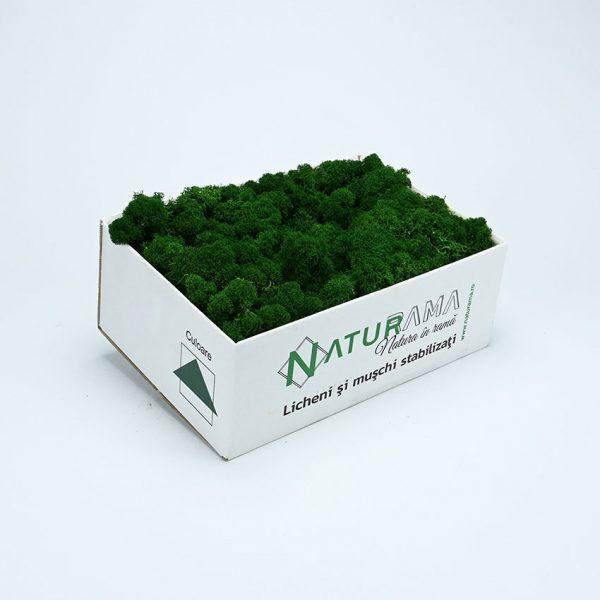 21 Verde Inchis INTENS 1
