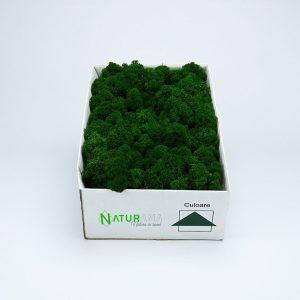 Licheni decorativi Naturama PREMIUM cutie 1000 grame Verde Inchis INTENS