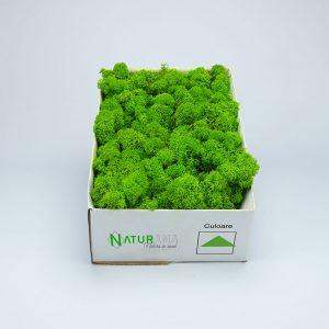 Licheni decorativi Naturama PREMIUM cutie 1000 grame Verde Deschis INTENS