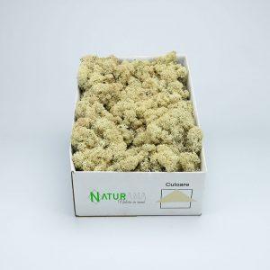 Licheni decorativi Naturama PREMIUM cutie 500 grame Alb Neutru INTENS