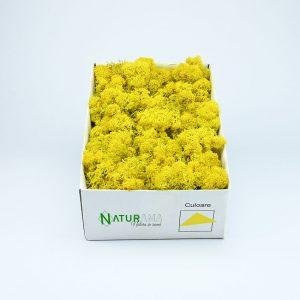 Licheni decorativi Naturama PREMIUM cutie 500 grame Galben Electric INTENS