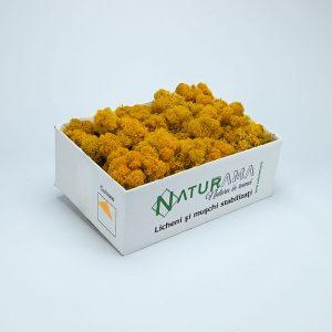 Licheni decorativi Naturama PREMIUM cutie 500 grame Galben Mustar INTENS