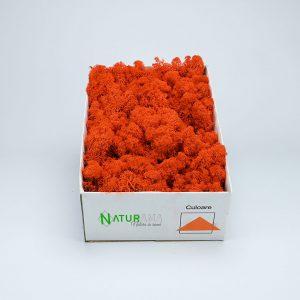 Licheni decorativi Naturama PREMIUM cutie 500 grame Orange INTENS