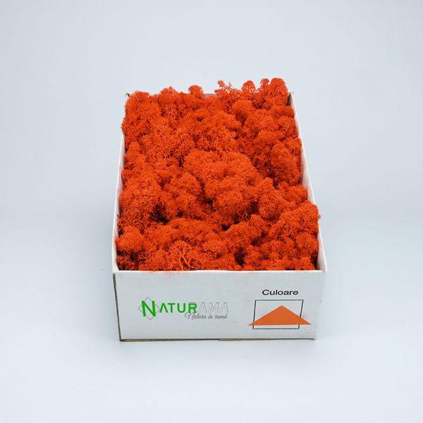 27 orange 2