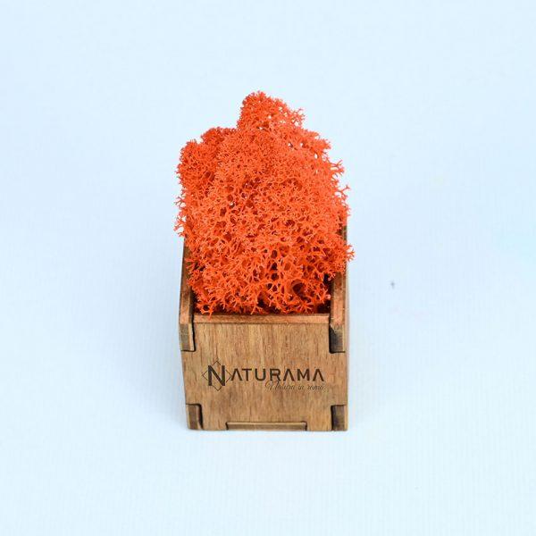 27 orange 3
