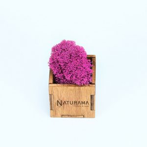 Licheni decorativi Naturama PREMIUM cutie 500 grame Fucsia INTENS