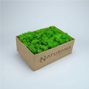 Licheni decorativi cutie 5 kg Verde Deschis