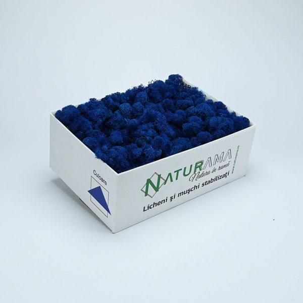 31 albastru inchis 1