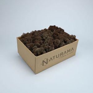 Licheni decorativi cutie 500 grame Maro