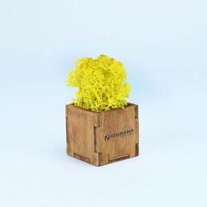 Licheni decorativi cutie 500 grame Galben Electric