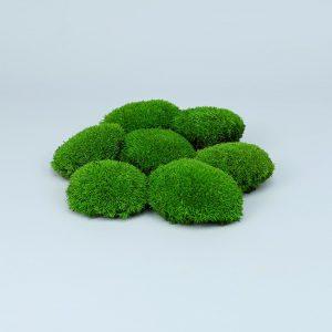 Muschi bombati verde deschis