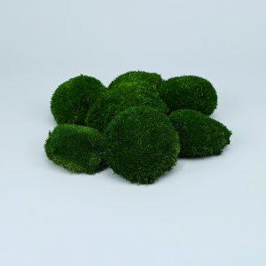 Muschi bombati verde inchis